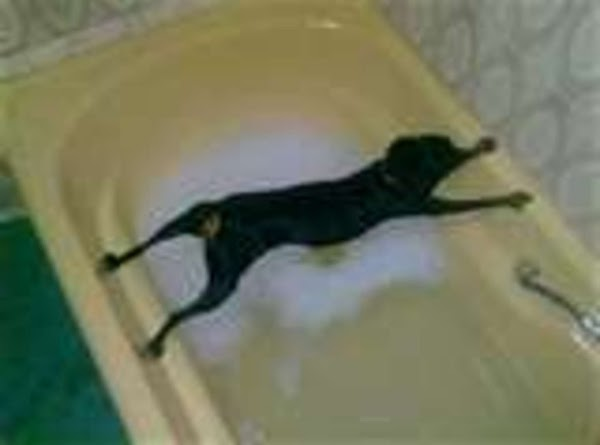 Homemade Flea Bath For The Water Unfriendly Types Recipe