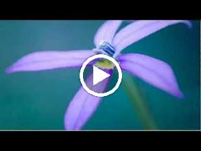 Video: A. Vivaldi  Armida (RV 699-A) - I XIII Aria [Armida]  Armata di furore -