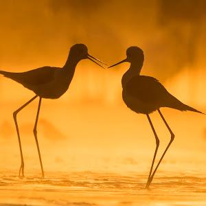 Golden love.jpg