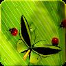 fishnoodle.ladybugs_free