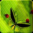 Friendly Bugs Free L.Wallpaper icon