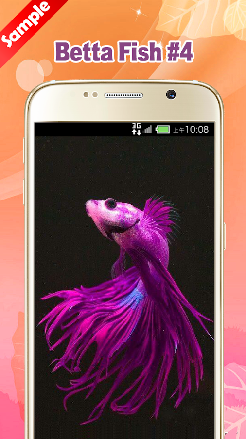 Betta fish wallpaper android apps on google play for Betta fish game