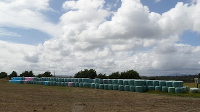 Photo: Silage bales are normally wrapped in green plastic, but farmers could support breast or prostate cancer research by pay extra for the pink or blue wraps.