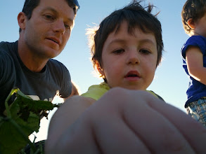 Photo: Daddy and Clark Pick Beans