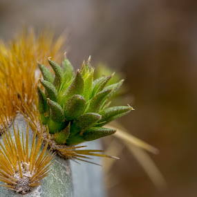 spring by Mike Gonzales - Nature Up Close Other plants ( spring, macro, cactus )