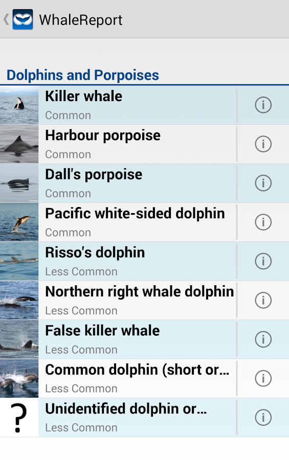 WhaleReport- screenshot