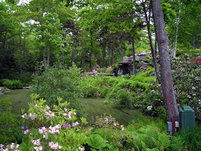 Photo: In Coastal Maine Botanical Gardens (http://www.mainegardens.org/)