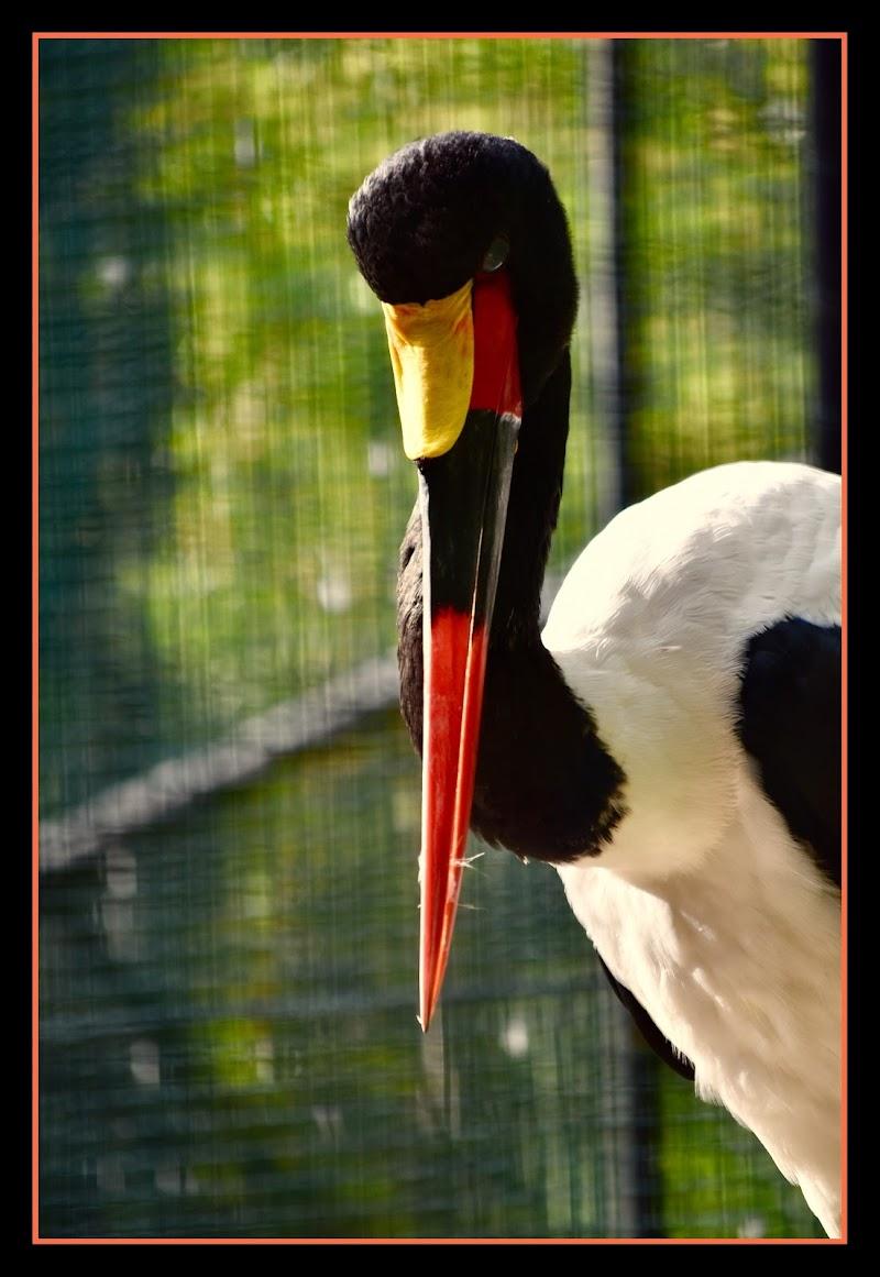 Orange birds  di TNST