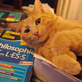 Philo cat by Ciprian Apetrei - Animals - Cats Playing ( cat, book, brittany, fun, ginger cat )