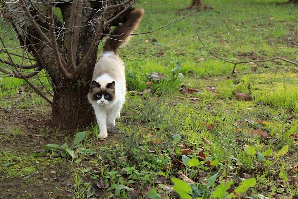 Il gatto di gocciazzurra