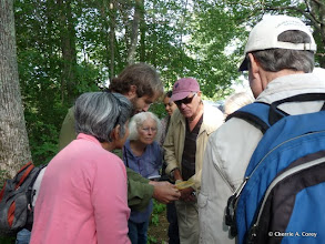 Photo: Sam Jaffe, introducing a spicebush sphinx moth caterpillar