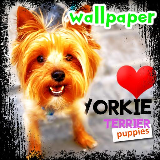 Yorkie Wallpaper Awesome Cute Puppy Backgrounds Apps On Google Play