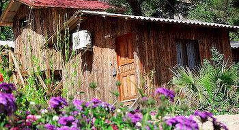 Saban Tree Houses