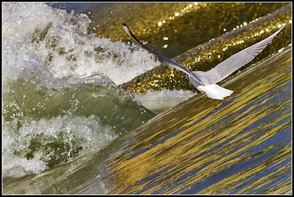 in volo sull'acqua del fiume di barbelfo