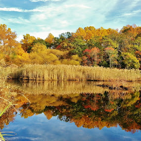 Beautiful Scenery At Weinberg Park by Matthew Beziat - Landscapes Waterscapes ( pasadena, fall leaves, autumn leaves, weinberg park, autumn, pond scenes, beautiful places, fall, anne arundel county, maryland, pasadena maryland,  )
