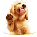 Doggy Lick your Screen LWP icon