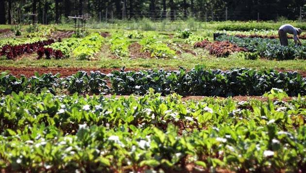 backyard produce market google