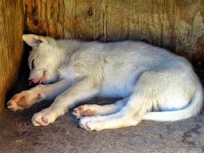 Photo: Getting my puppy fix.