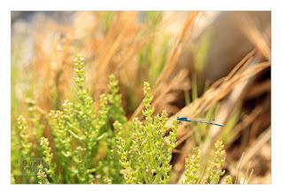 Photo: Eastern Sierras-20120715-96