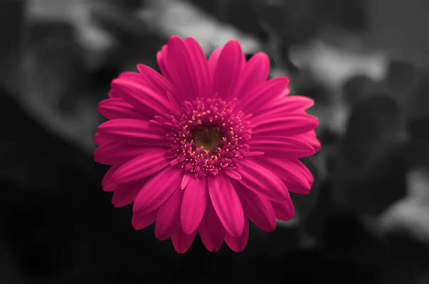 Shocking color di PhotoBySaraPesucci