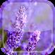 Lavender Live Wallpaper HD