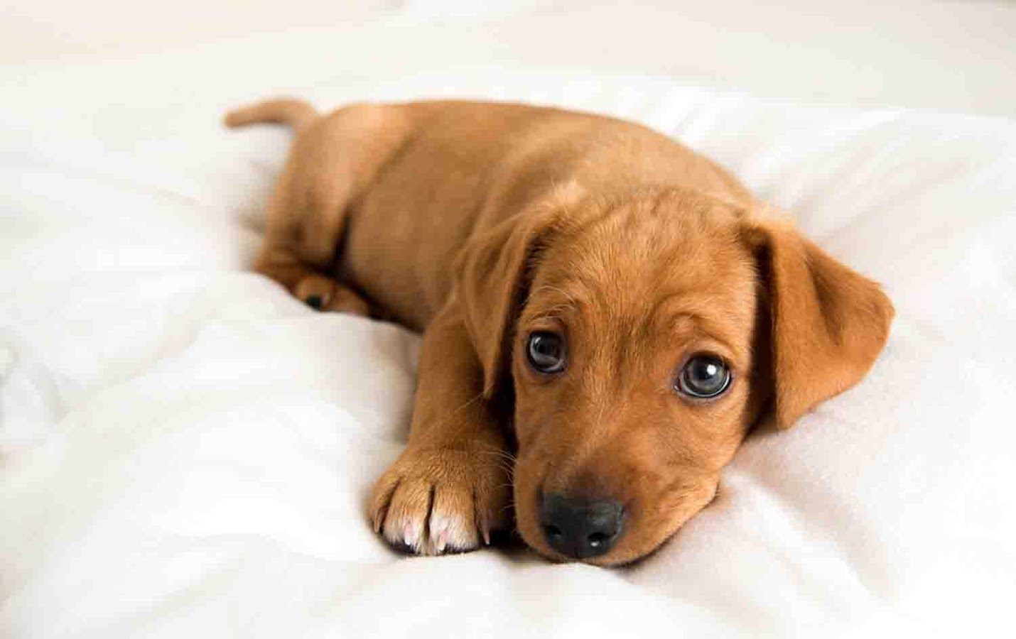 cute puppies wallpapers laptop