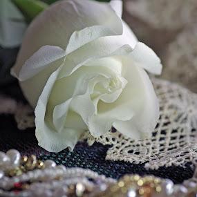 Memories by Dyane Kirkland - Artistic Objects Still Life ( rose, lace, still life, antique, flower )