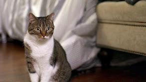 Meow Mates thumbnail