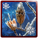 Winter Snowfall 3D Paralax LWP icon