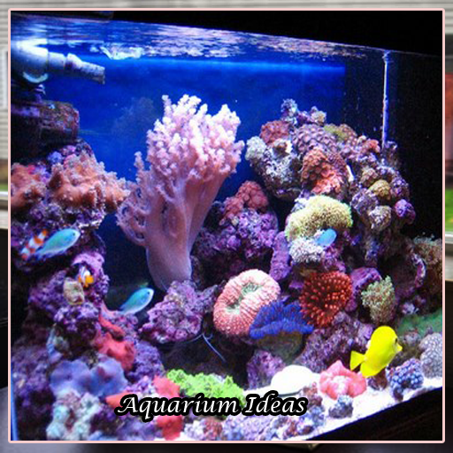 Aquarium Design Ideas