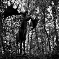 in bosco  di