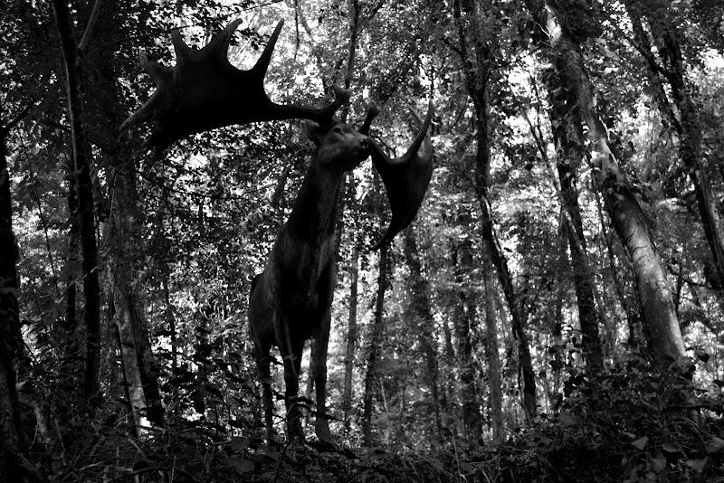 in bosco  di malinowska