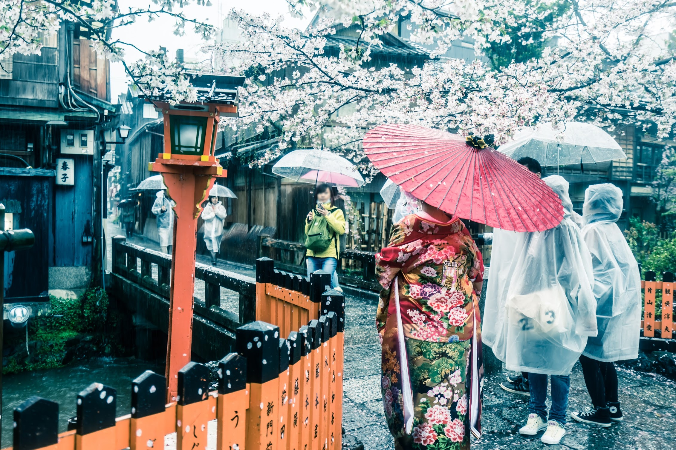 Kyoto Gion cherry blossoms1