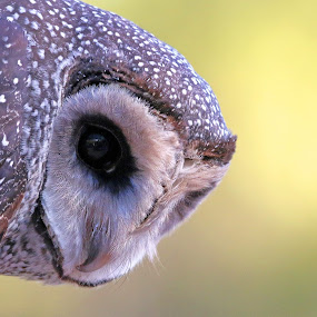I've got my eyes on you by Simon  Rees - Animals Birds