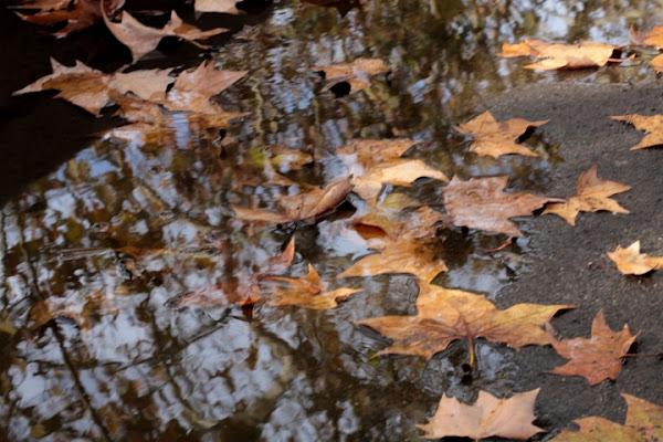 Foglie d'autunno di ale1981