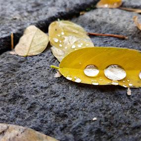 by Nil Jay - Nature Up Close Natural Waterdrops