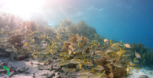 bonaire-school-fish-reef.jpg - A school of tropical fish in one of Bonaire's countless coral reefs.