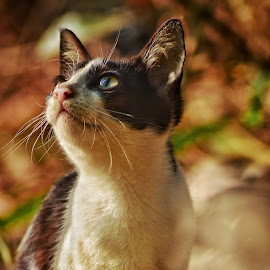 by Albin Akkara - Animals - Cats Portraits
