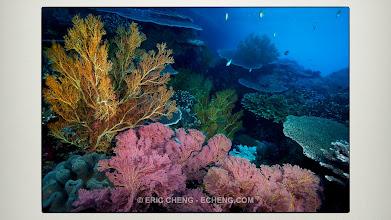 Photo: Lush reefs: Raja Ampat, Indonesia