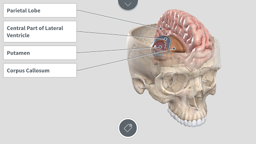 Complete Anatomy For Android Apk Download Apkpure