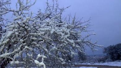 Photo: That dreaded white stuff in a plum tree.