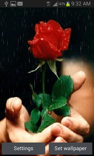 Red Rose For You LWP