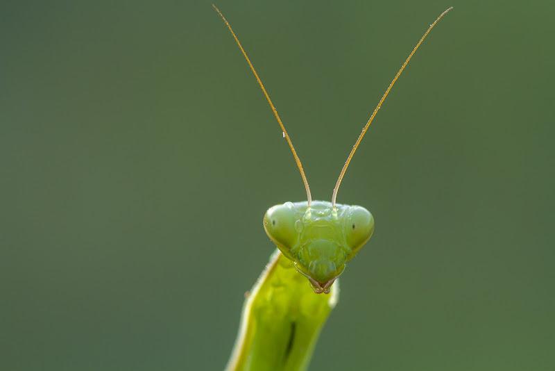Verdi sguardi di gabrielomar
