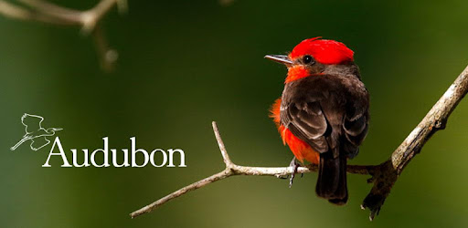 Identify over 800 bird species