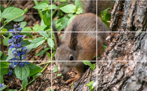Puzzle - Forest animals screenshot 8