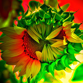 Vibrant Colours by Sanjeev Leihao - Nature Up Close Flowers - 2011-2013