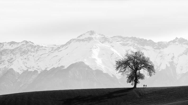 La quercia e le montagne di renzodid