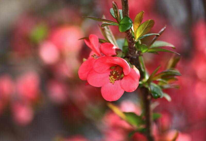 Il fiore di c
