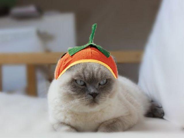 Sıradışı ve Komik Kediler