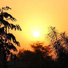 Golden Sunrise with Dark Tree by Manish Upadhyay - Landscapes Sunsets & Sunrises ( canon, tree, nature close up, nature photography, sunrise, morning, landscapes, canon eos )
